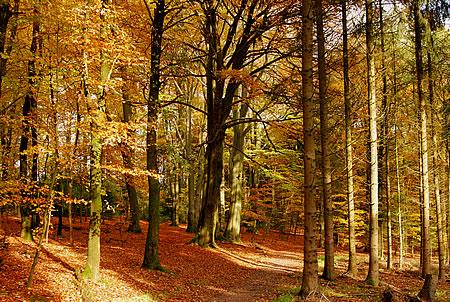 Herbstimpressionen Bergisches Land