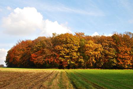 Bergisches Land im Herbst