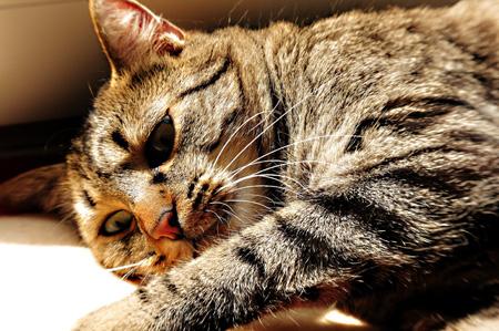 Kasimir - Schlaf des Gerechten (.. warum klackt Dein schwarzer Kasten immer so?)