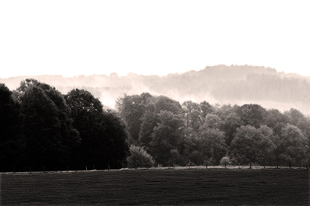 Ispingrade im Nebel