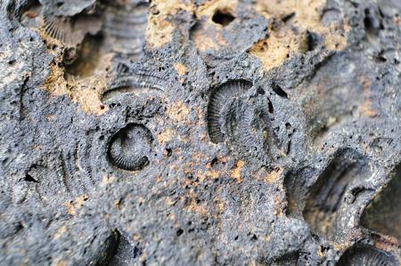 Abdrücke im Stein