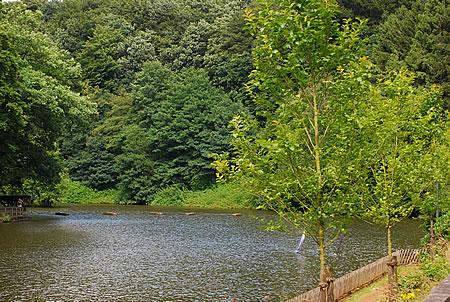 Ülfetal Brücke am Ülfebad Radevormwald