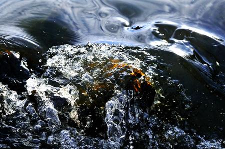 Wuppergold - Gold in der Wupper bei Hammerstein